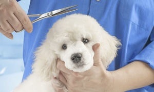 Up to 45% Off Dog Grooming at Best Friends Pet Grooming at Best Friends Pet Grooming, plus 6.0% Cash Back from Ebates.