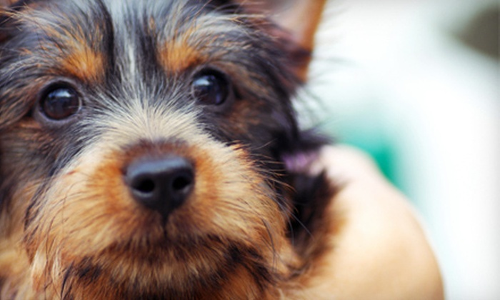 Sophisticuts Dog Salon - Charlotte: One or Three Dog-Grooming Packages at Sophisticuts Dog Salon (Up to 62% Off)