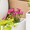 Cement Wall Planters (2-Piece)