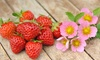 Strawberry Just Add Cream Plant