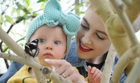 Entry for Two or a Family of Four to North Somerset Butterfly House (Up to 36% Off)