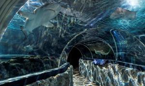 Sylt Aquarium: Eintrittskarte für die Aquarium-Welt für 1, 2 oder 5 Personen, opt. mit Minigolf, im Sylt Aquarium (bis zu 52% sparen*)