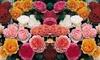 Rosenblumen für den Garten