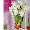 Paperwhites White Winter Flower Bulbs (Set of 5)