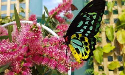 Butterfly House Entry: Child ($4), Adult ($7) or Family ($19) at Gold Coast Butterflies (Up to $30 Value)