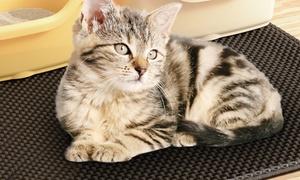 Tapis zéro litière chat