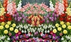Pre-Order: Blooming Flower Bulbs (100-, 200-, or 400-Pack w/ Planter)