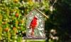 Embossed Cardinal Bird Feeder: Embossed Cardinal Bird Feeder