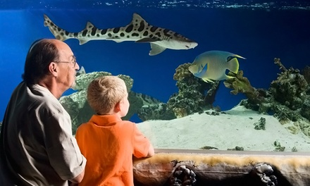 Visit for 1 Adult, 1 Adult & Child, or 2 Adults & 2 Children or Birthday Party at Austin Aquarium (Up to 50% Off)