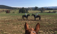 60-Minute Horse Outride from R149 for One with Buffelsbosch Equestrian (32% Off)