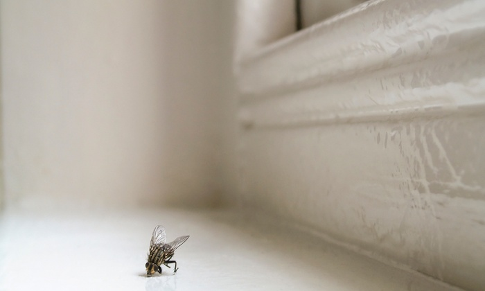Hope Pest Solutions - Jonesboro: $59 for Interior and Exterior Pest-Control Service from Hope Pest Solutions ($150 Value)