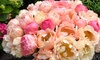Peony Coral Sunset Plant