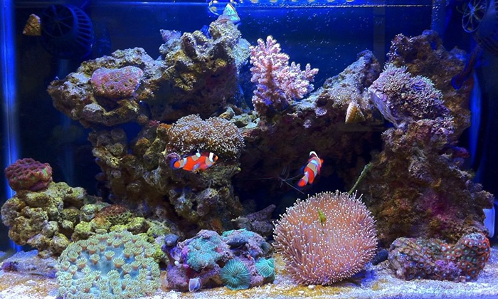 Fintastic - Gilbert: Salt-Water Aquarium Servicing for Tanks Up to 300 Gallons or More from Fintastic (50% Off)