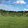 Up to 43% Off at Wight-Meyer Vineyard & Winery
