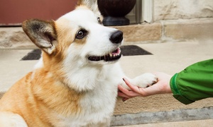 Animal Medical Center: Physical Exam with Grooming and Teeth Brushing for Small, Medium, or Large Dog at Animal Medical Center (Up to 63% Off)