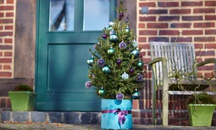 weihnachtsbaum im topf groupon goods. Black Bedroom Furniture Sets. Home Design Ideas