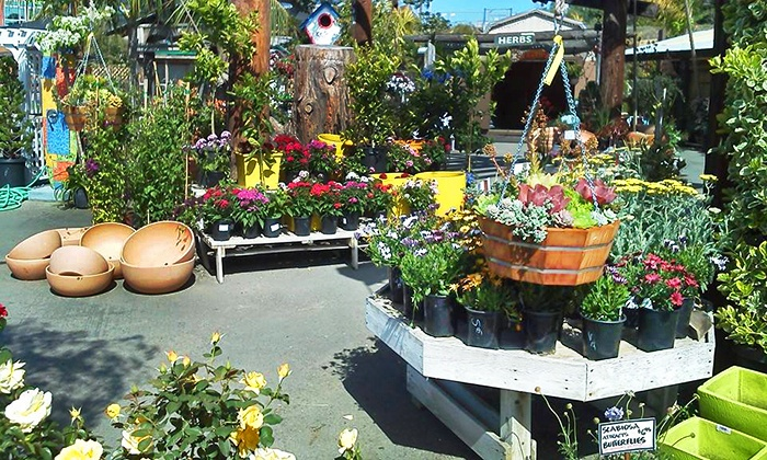 Sunshine Gardens - Encinitas: $17 for $30 Worth of Seeds, Soil, Fertilizer, and Flowers at Sunshine Gardens
