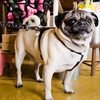 38% Off Pet Sitting Services