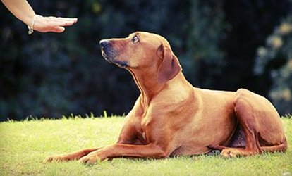 image for $250 for Five Private Dog Training Lessons ($500 Value) — Little Paws <strong>Pet</strong> Resort