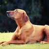 50% Off Five Private Dog Training Lessons