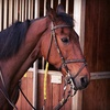 Up to 56% Off Riding Lessons at Diamond Equestrian