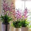 Lot de plantes Tillandsia Mora