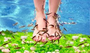 Atlantis Fish Spa & Wellness: 30 Min. Fisch-Spa u. Getränk, opt. Maniküre u. Pediküre für 1 od. 2 im Atlantis Fish Spa & Wellness (bis zu 47% sparen*)