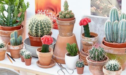 Set van verschillende cactussen