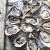 Up to 50% Off Southern New England Food at East Bay Oyster Bar