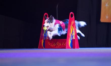 Chris Perondi's Stunt Dog Experience on May 13 at 2 p.m. or 6 p.m.