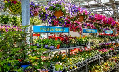 image for $18 for $30 Worth of Flowers, Plants, and Spring Garden Supplies at Orange Garden Center