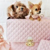 Up to 38% Off Pet Supplies and Accessories