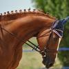 Equitazione con istruttori federali