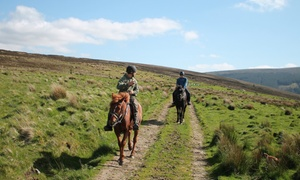 Hollywood Horse and Pony Trekking: 90-Minute Wicklow Riding Adventure for One or Two with Hollywood Horse and Pony Trekking