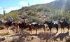 56% Off Horseback Trail Ride