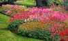 Astilbe Breeders Mix Bare Root Plants (5-Pack): Astilbe Breeders Mix Bare Root Plants (5-Pack)