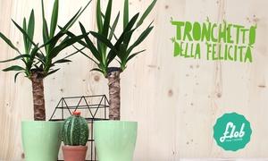 Flob: Flob think in flower - Bonsai, piante e carte regalo per una primavera in fiore. Spedizione gratuita in tutta Italia