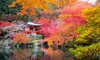 Conjunto de 4 arces japoneses
