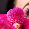 Up to 63% Off Eyelash Perm or Extensions