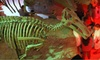 Houston Museum of Natural Science - The Museum District: Spirits & Skeletons Mixer for Two or Four on Friday, October 26 at Houston Museum of Natural Science (Half Off)