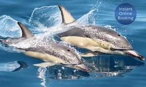 E-KO Tours: Half-Day Guided Dolphin Cruise & Wildlife Tour: 1 ($69), 2 ($135) or 4 People ($259) with E-KO Tours (Up to $396 Value)