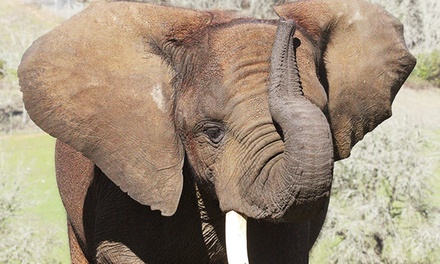 Elephant Elves Holiday Workshop or Drive-Through Admission for One or Two at Wildlife Safari (Up to 52% Off)