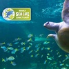 Manly SEA LIFE - 40% Off Entry