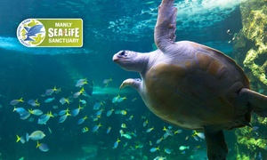 Manly SEA LIFE Sanctuary: Manly SEA LIFE Sanctuary Entry - Child ($10) or Adult ($15), Manly (Up to $25 Value)