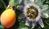 Plantas de fruta de la pasión