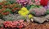 Groupon Goods Global GmbH: Winterharter, großer Staudengarten, 28, 42 oder 56 Pflanzen