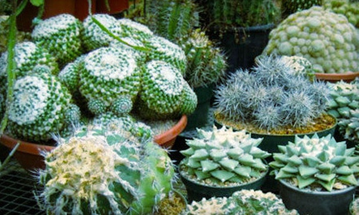 California Cactus Center - East Pasadena,Chapman: $25 Worth of Cacti and Desert Plants