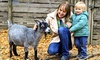 Langleybury Farm - Langleybury Children's Farm: Family Entry for Five to Langleybury Farm (55% Off)