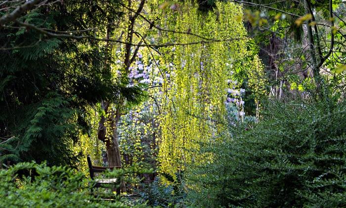 Up To 43% Off UBC Botanical Garden U0026 Greenheart TreeWalk Entry ...