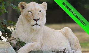 Safaripark: Eintrittskarte inkl. Nutzung aller Attraktionen für eine Person für den Safaripark (35% sparen*)